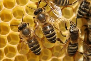 Fall Creek Farms Honey Bee