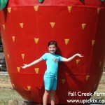 Fall Creek Farms Attractions