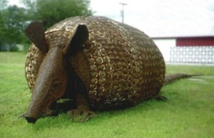 """Killer"" The World's Largest Armadillo"